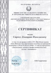 certificate_17_Strok
