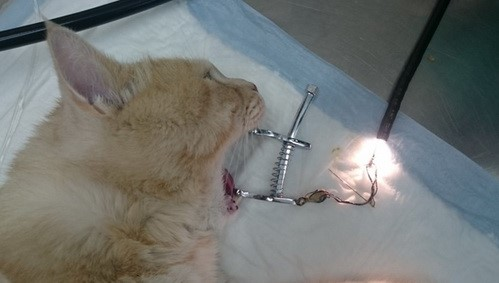 Рис 6. Инородное тело (Иголка с ниткой) извлечено эндоскопом из желудка
