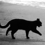 кошка ДТП