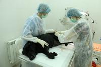 плазмаферез собаке
