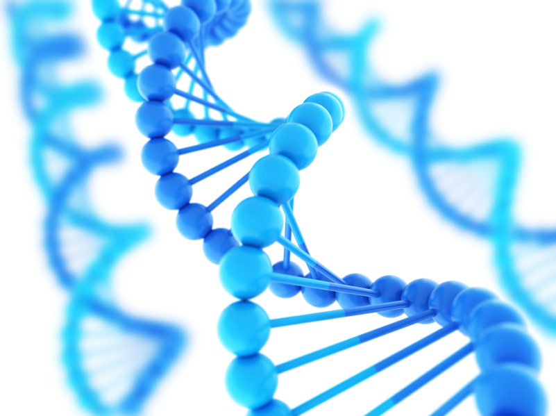 Обнаружение фрагментов ДНК