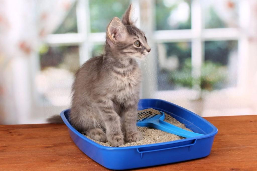 трихомонады, диарея у кота